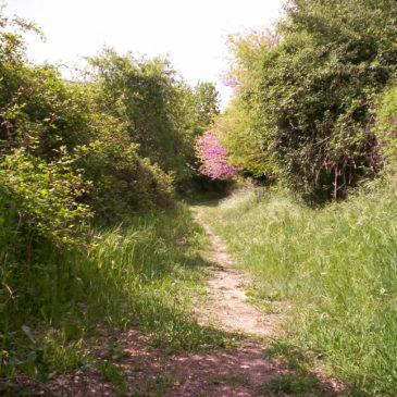 Riaperta la vecchia via dei cavatori